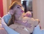 милые и очаровательные ребенок обезьяна для принятия